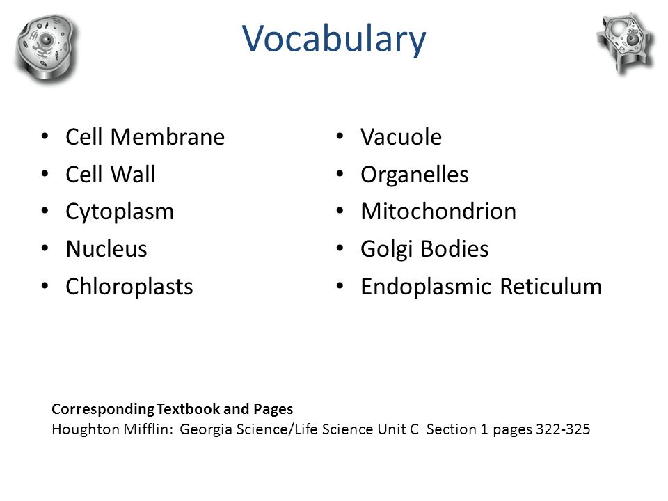 Plant and animal cells an introduction ppt video online download vocabulary cell membrane cell wall cytoplasm nucleus chloroplasts ccuart Choice Image