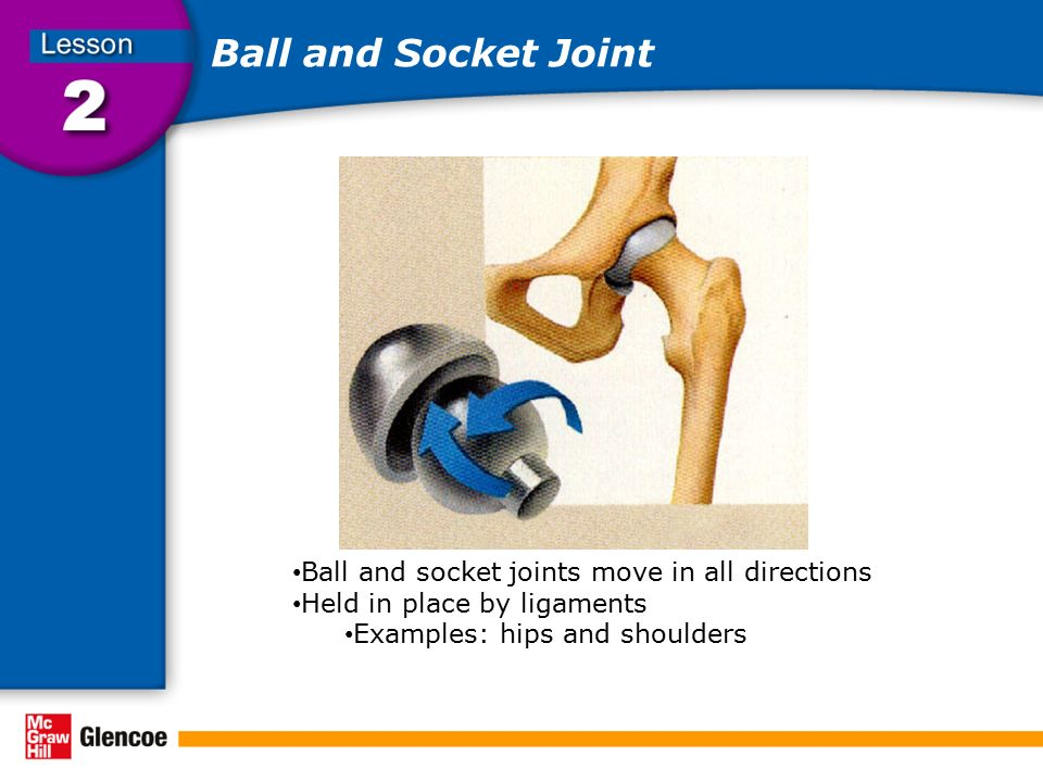 Ball and Socket Joint Ball and socket joints move in all directions