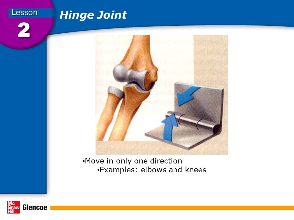 Hinge Joint Move in only one direction Examples: elbows and knees