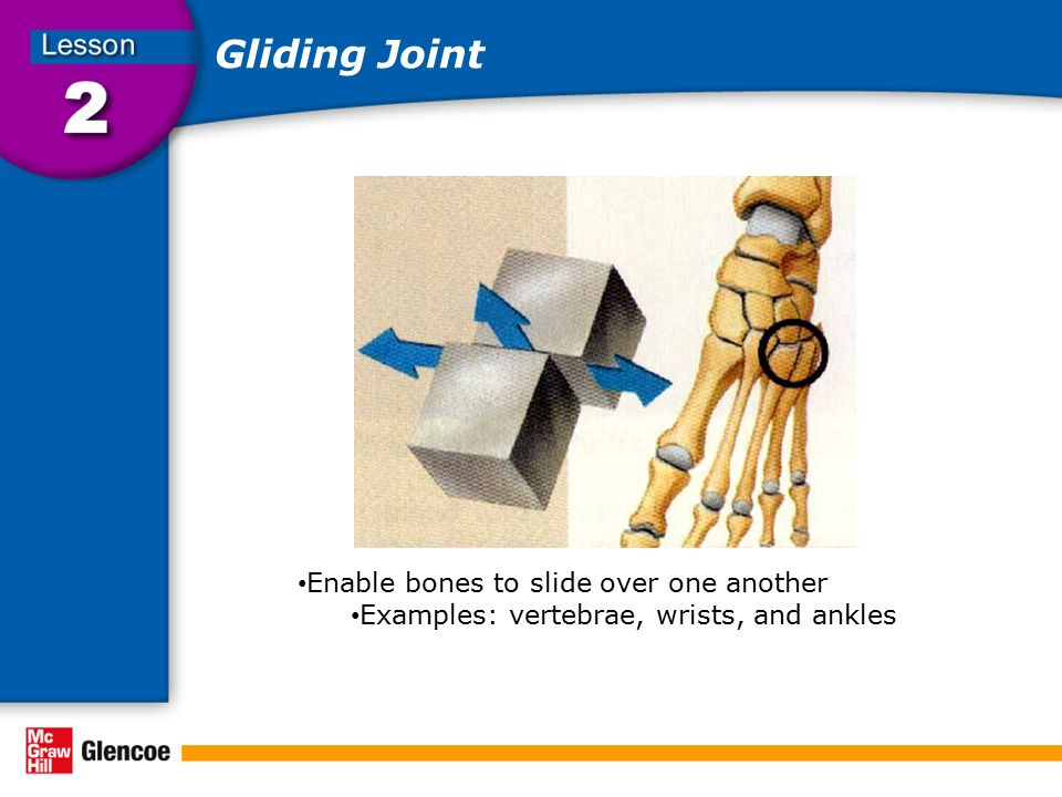 Gliding Joint Enable bones to slide over one another