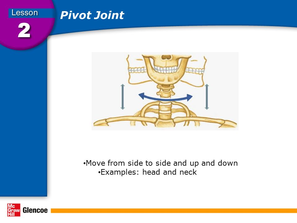 Pivot Joint Move from side to side and up and down