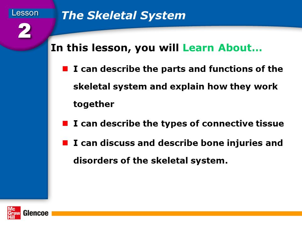 The Skeletal System In this lesson, you will Learn About…