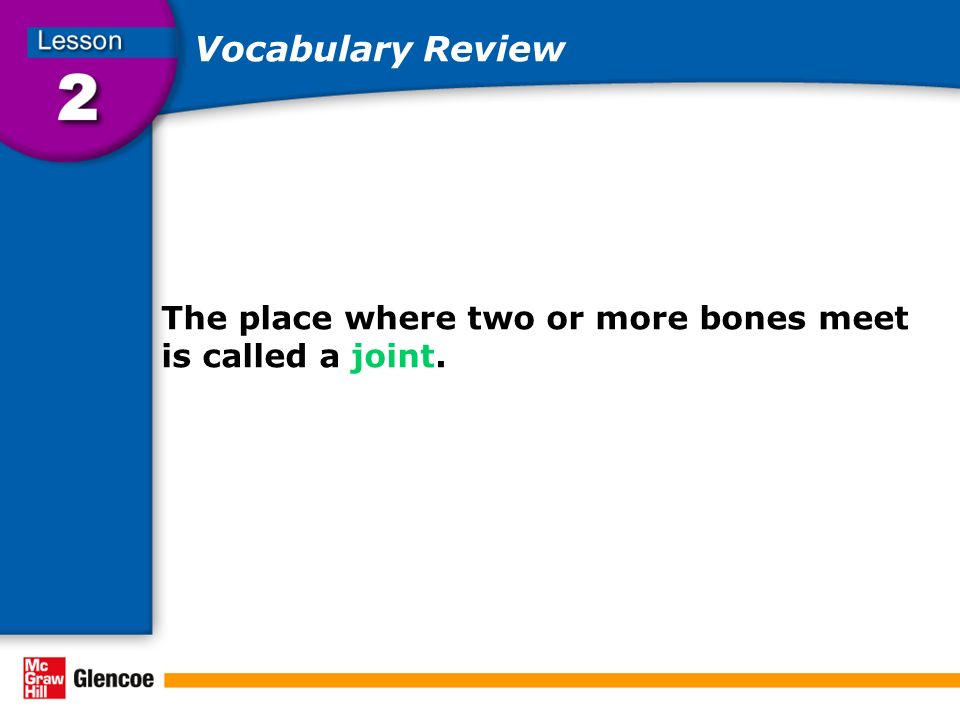 Vocabulary Review The place where two or more bones meet is called a joint.