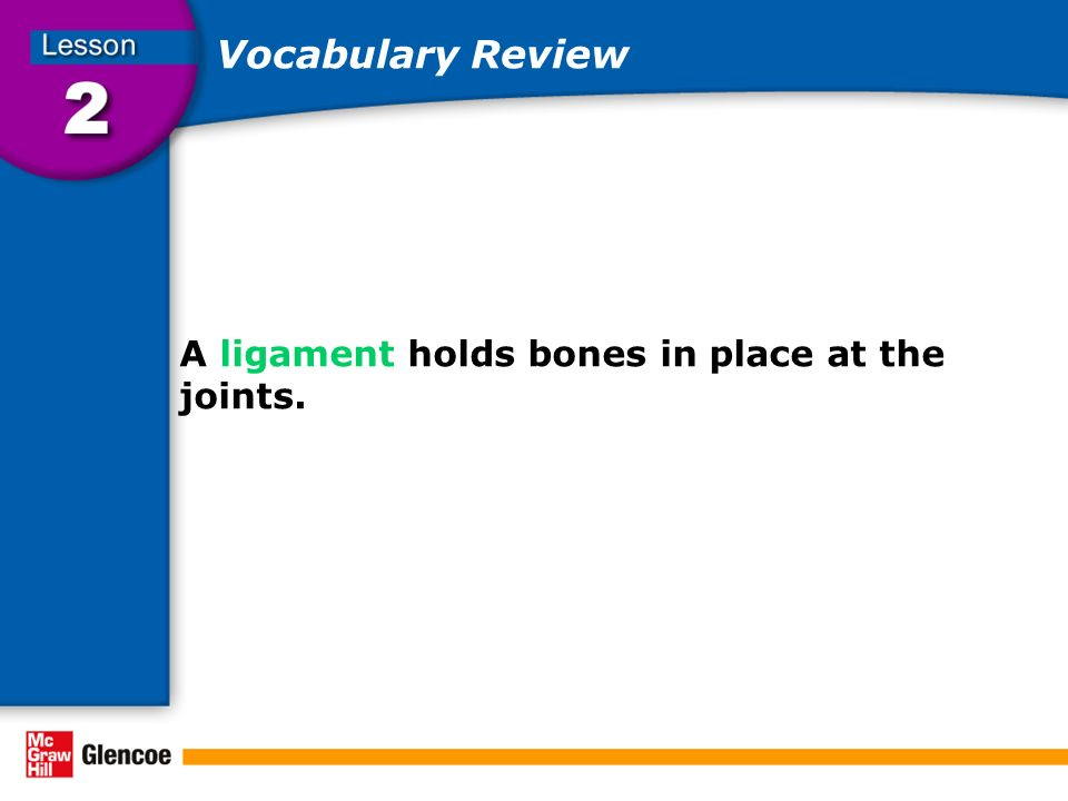 Vocabulary Review A ligament holds bones in place at the joints.