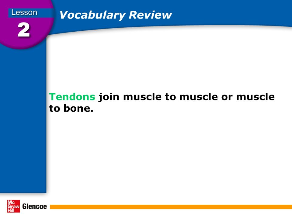 Vocabulary Review Tendons join muscle to muscle or muscle to bone.