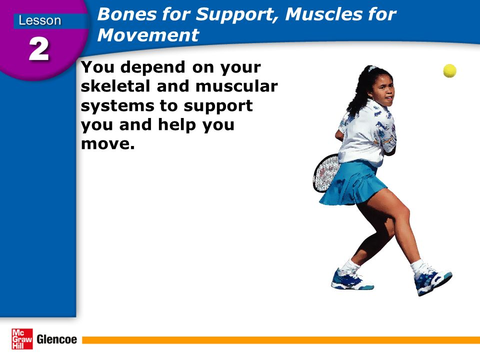 Bones for Support, Muscles for Movement