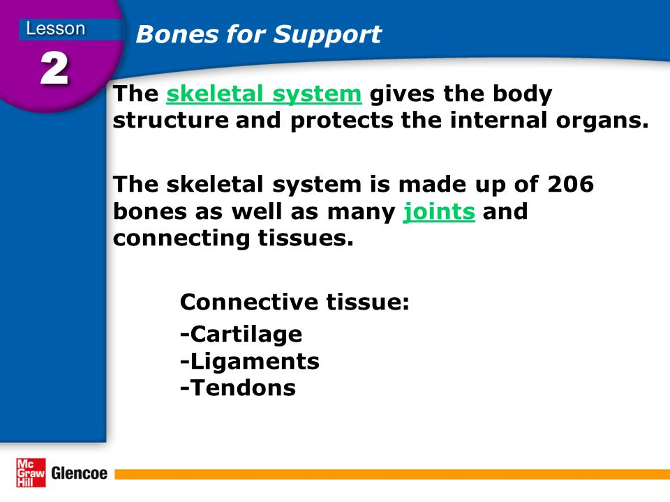 Bones for Support The skeletal system gives the body structure and protects the internal organs.