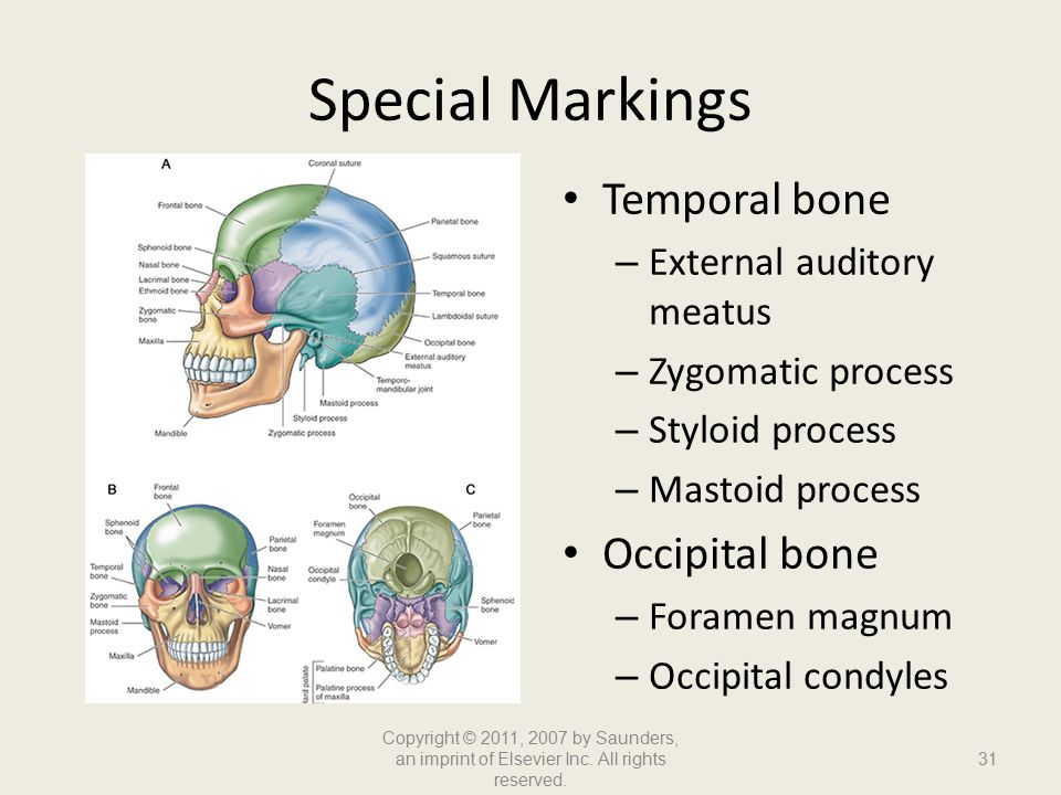 Skeletal System. - ppt video online download