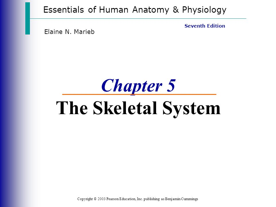 Niedlich Essentials Of Human Anatomy And Physiology Chapter 5 ...