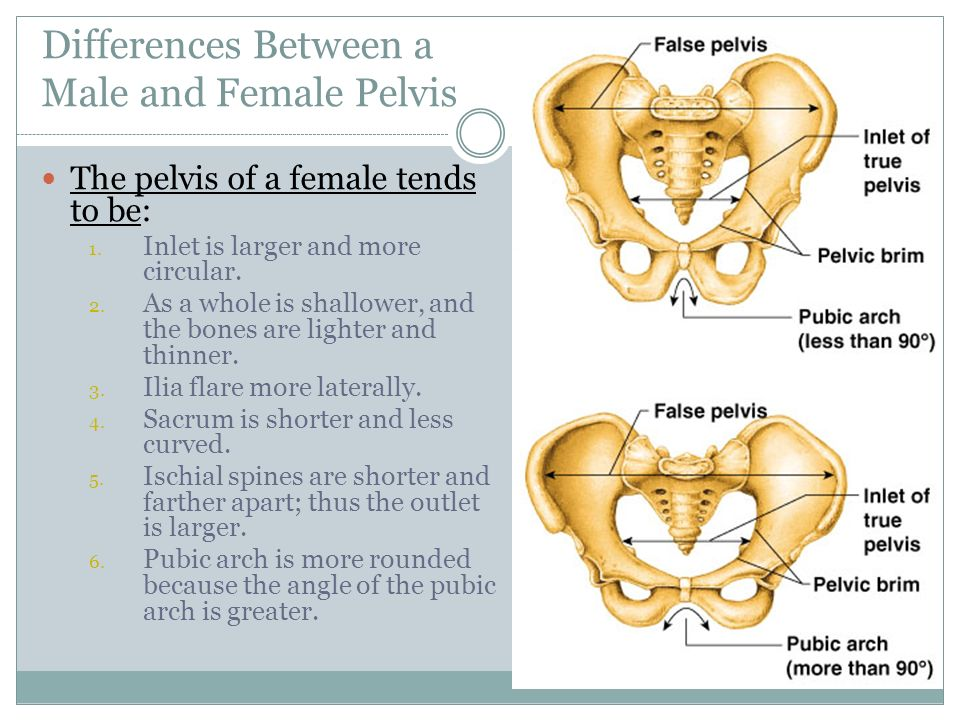 what s the difference between male and This article discusses the major differences between the male and female human skeleton.