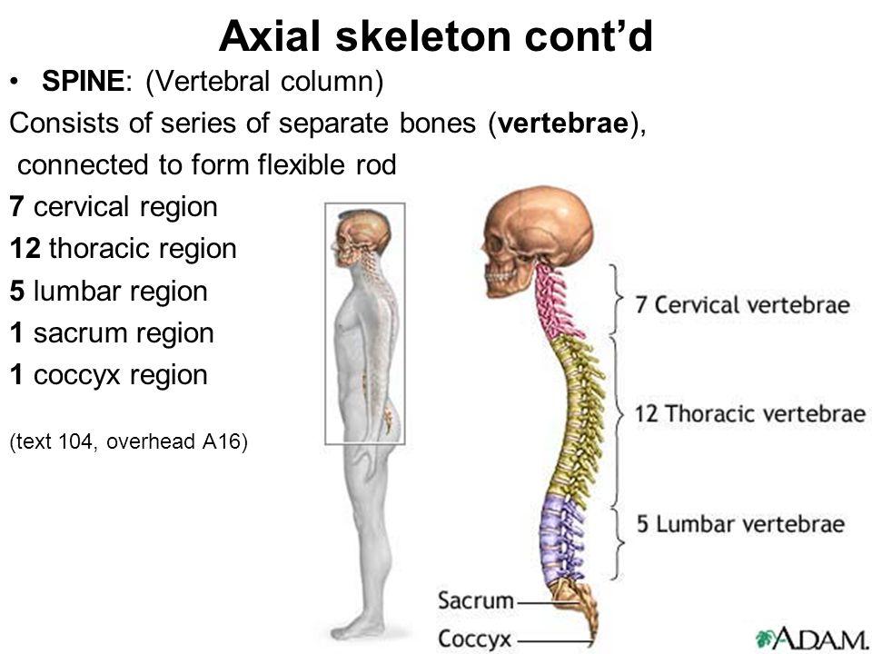 Axial Region