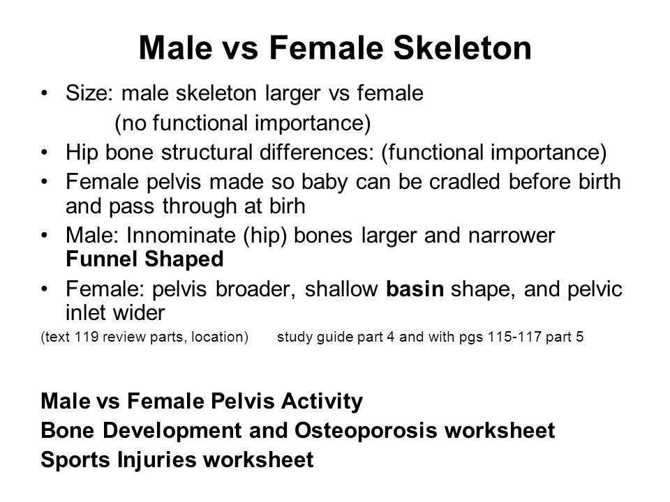 Skeletal System Provides body with rigid framework of support and – Structure of Bones Worksheet