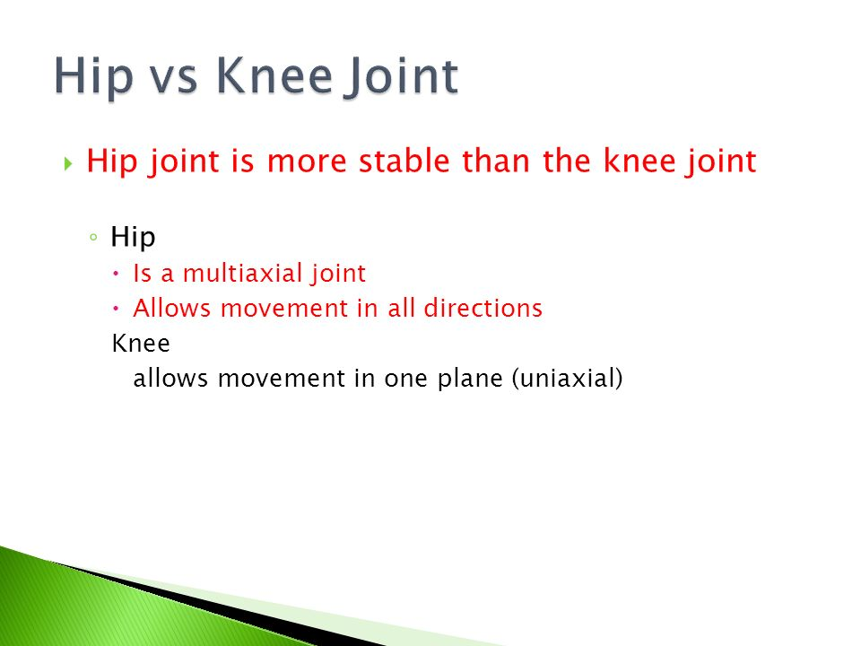 Hip vs Knee Joint Hip joint is more stable than the knee joint Hip