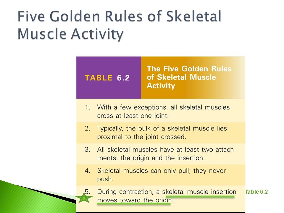 Five Golden Rules of Skeletal Muscle Activity