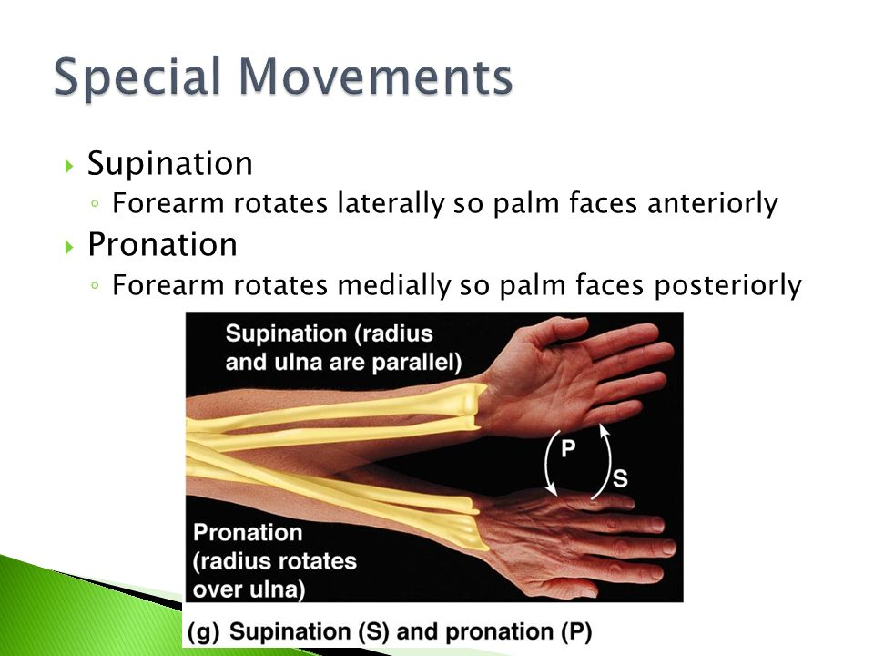 Special Movements Supination Pronation