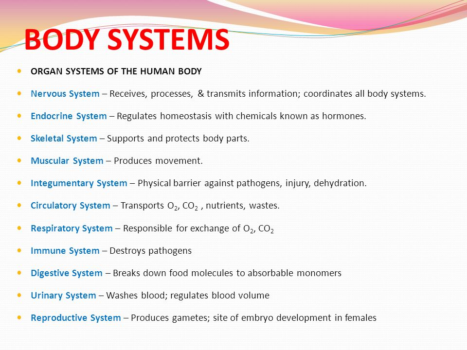 body systems. - ppt video online download, Muscles