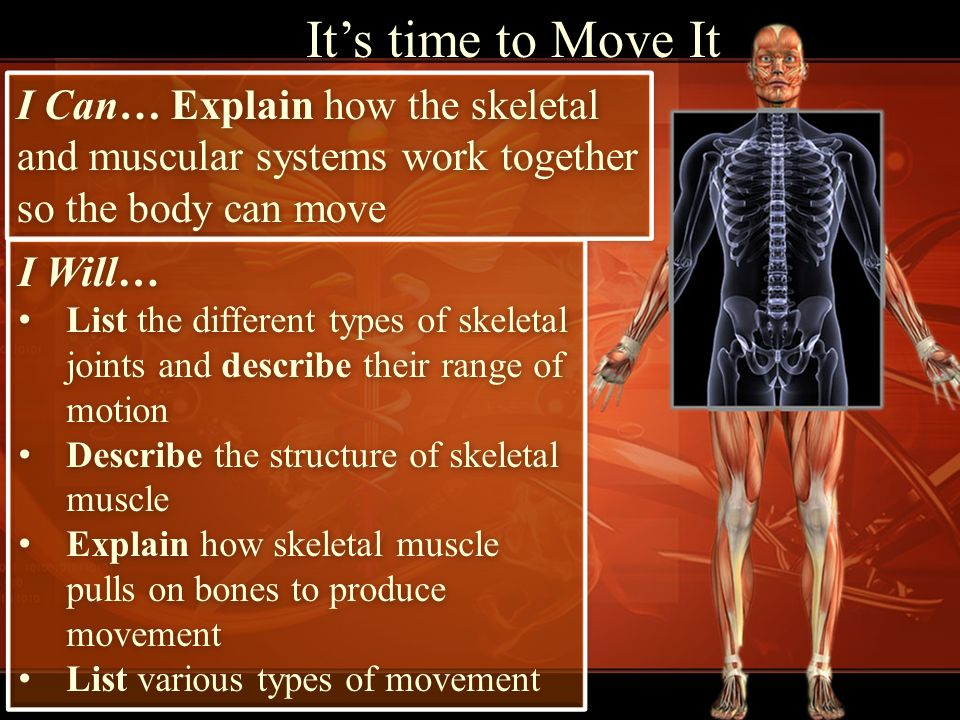 Its Time To Move It I Can Explain How The Skeletal And Muscular