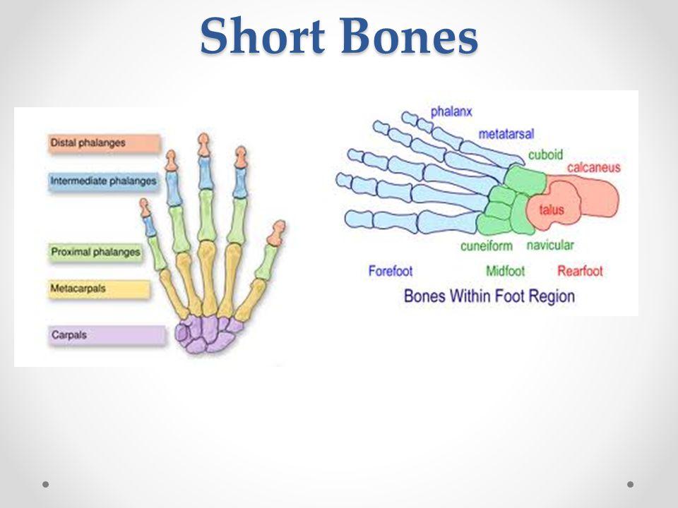 Paul Levinson's Infinite Regress: Bones 12.7-8: Loss and ...