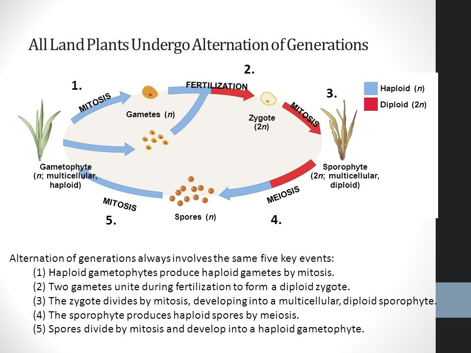 Reproduction Humans and Plants. - ppt video online download