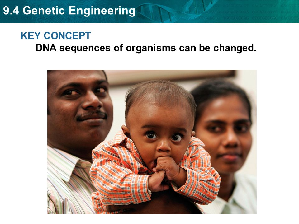 KEY CONCEPT DNA sequences of organisms can be changed.