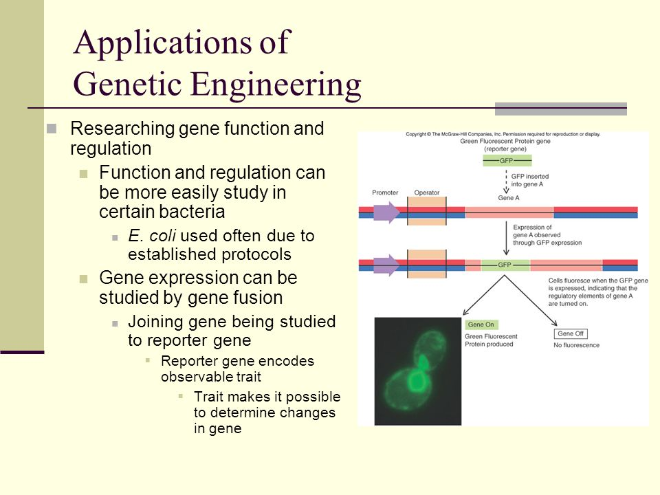 genetic observations through the studies of This paper provides a review of the design and analysis of genetic association studies genetic studies have already proved through association studies with.