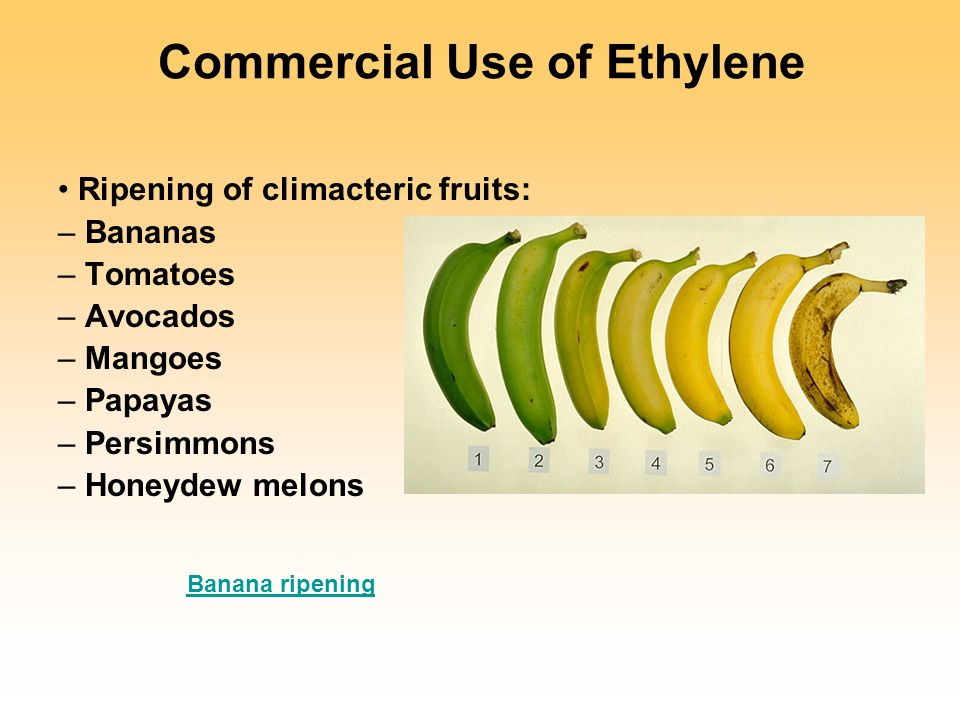 fruit ripening essay Ethylene is the simplest unsaturated hydrocarbon, yet it has profound effects on plant growth and development, including many agriculturally important phenomena analysis of the mechanisms underlying ethylene biosynthesis and signalling have resulted in the elucidation of multistep mechanisms which at first glance appear simple, but in fact.