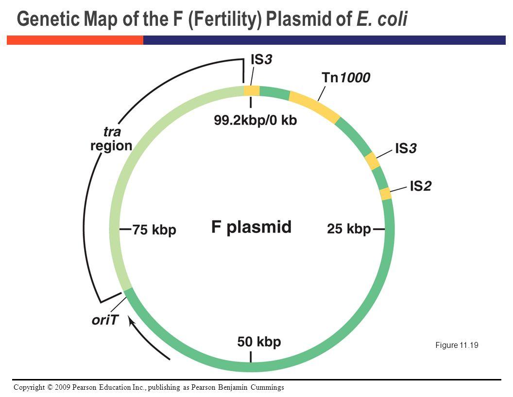 E Coli Diagram Plasmid Principles of Bacteria...