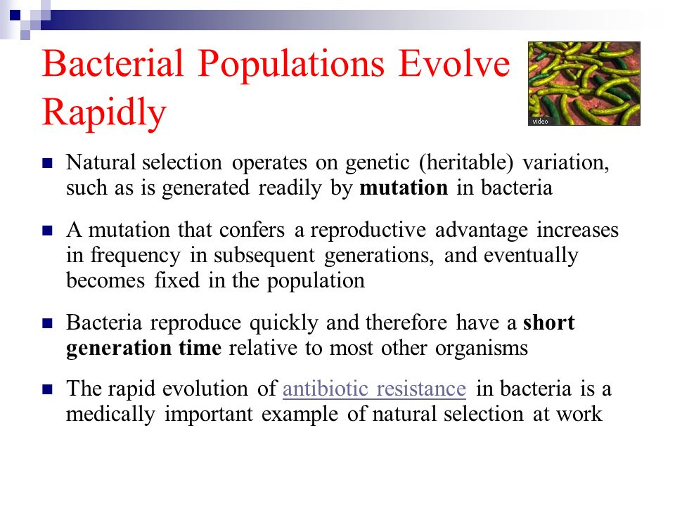 Bacterial Populations Evolve Rapidly