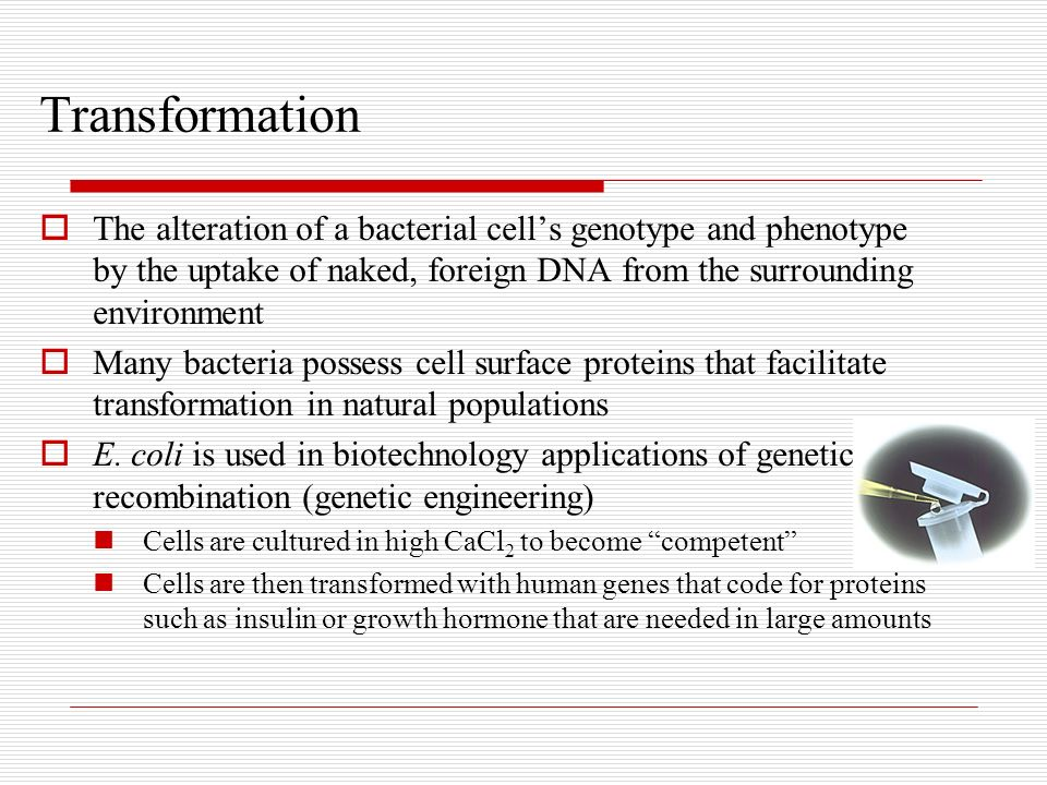 Transformation The alteration of a bacterial cell's genotype and phenotype by the uptake of naked, foreign DNA from the surrounding environment.
