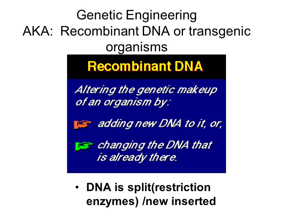 Genetic Engineering AKA: Recombinant DNA or transgenic organisms