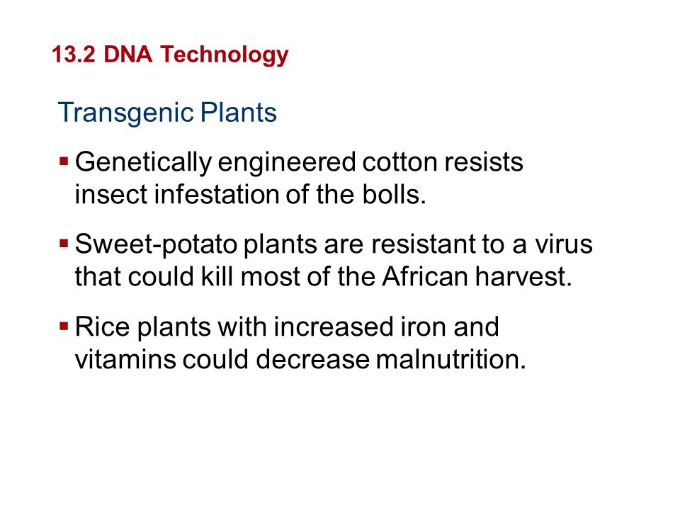 Genetically engineered cotton resists insect infestation of the bolls.