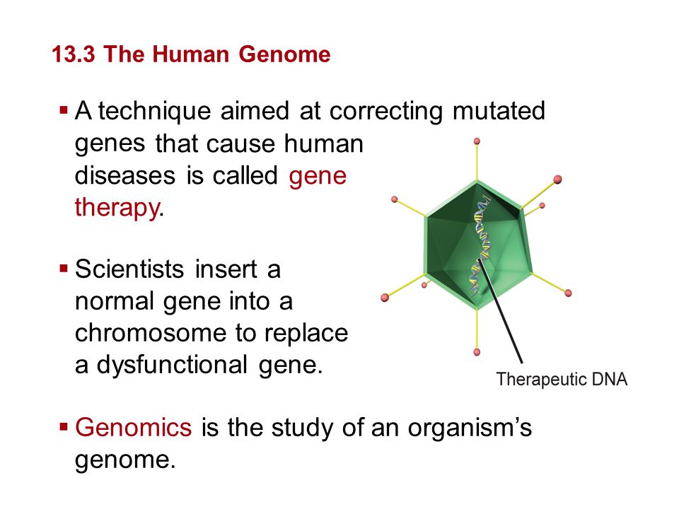 A technique aimed at correcting mutated genes that cause human