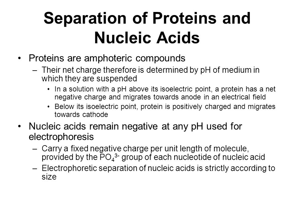 protein and nucleic acid relationship questions