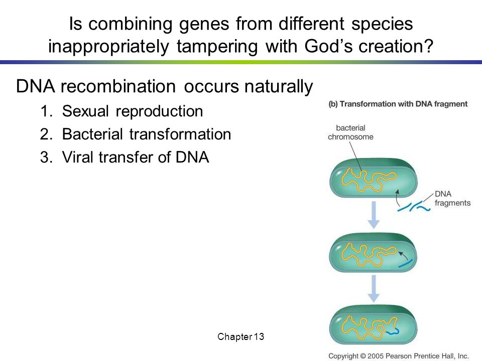 DNA recombination occurs naturally