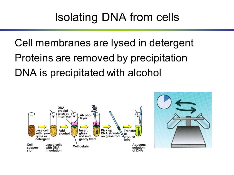 Isolating DNA from cells