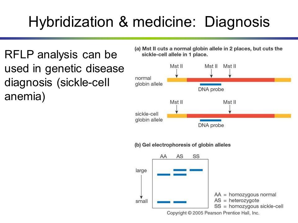Hybridization & medicine: Diagnosis