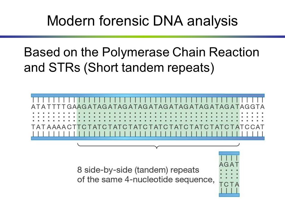 Modern forensic DNA analysis