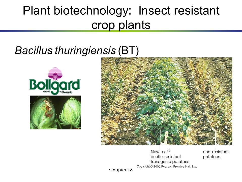 Plant biotechnology: Insect resistant crop plants