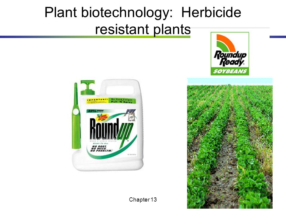Plant biotechnology: Herbicide resistant plants