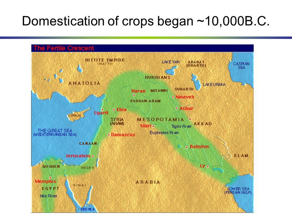 Domestication of crops began ~10,000B.C.