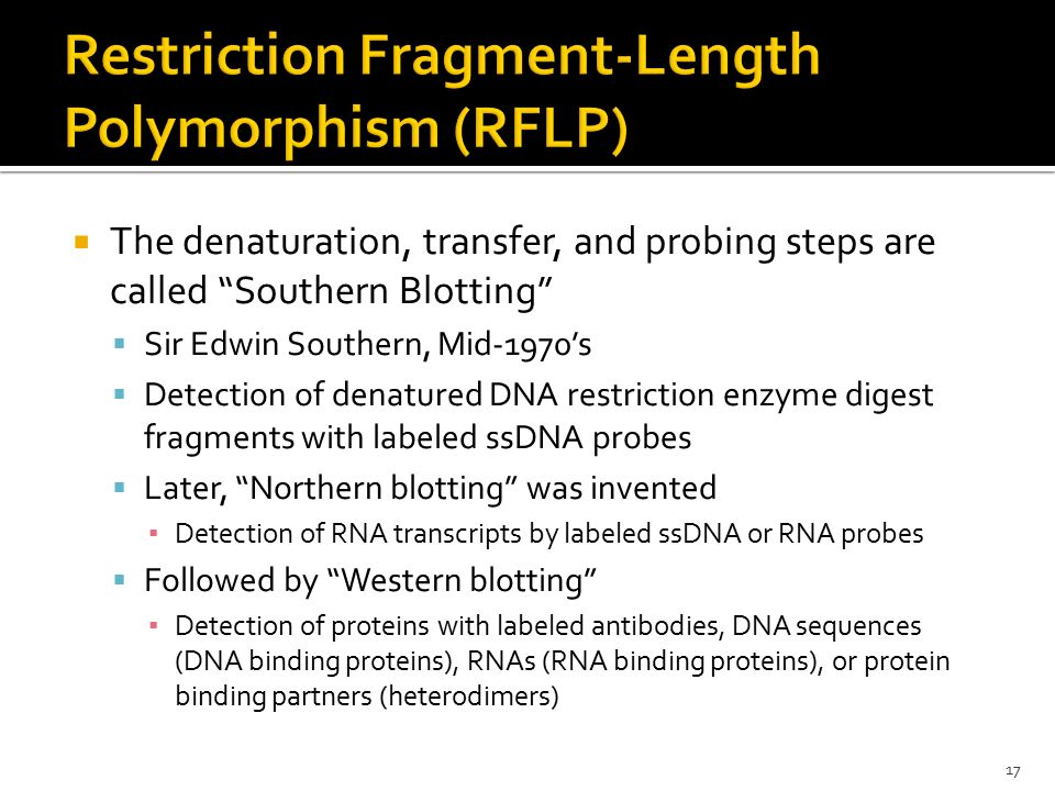 Restriction Fragment-Length Polymorphism (RFLP)