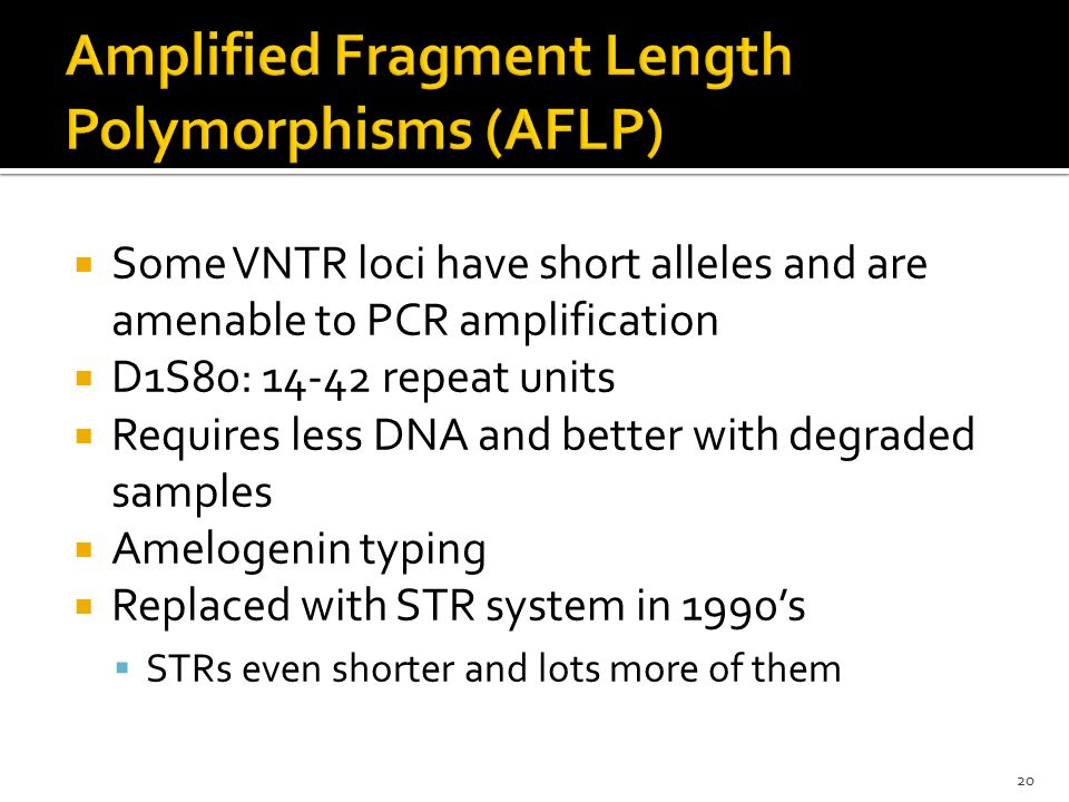 Amplified Fragment Length Polymorphisms (AFLP)
