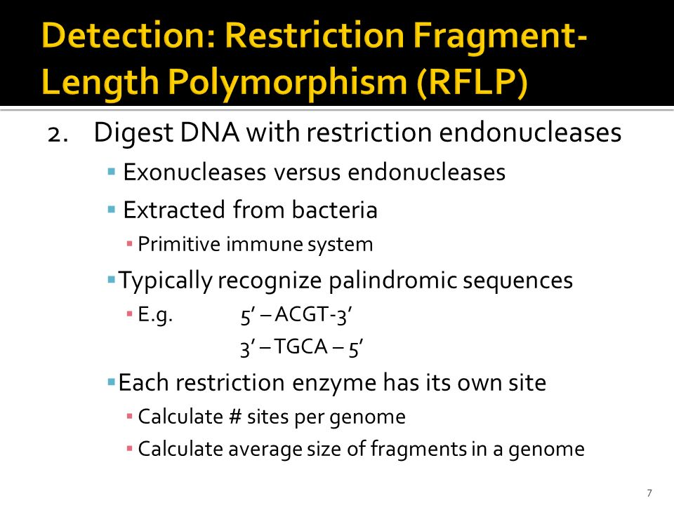 Detection: Restriction Fragment-Length Polymorphism (RFLP)