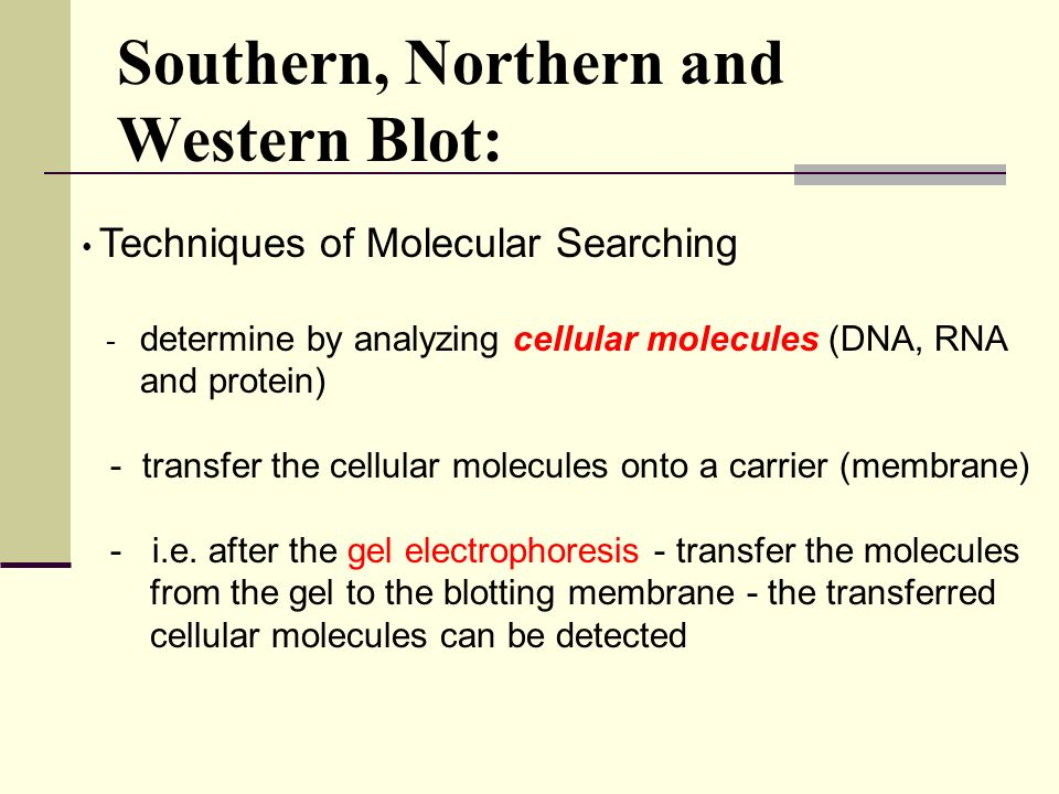 applications of northern blotting pdf