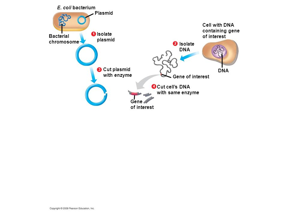 Figure 12.1 An overview of gene cloning.