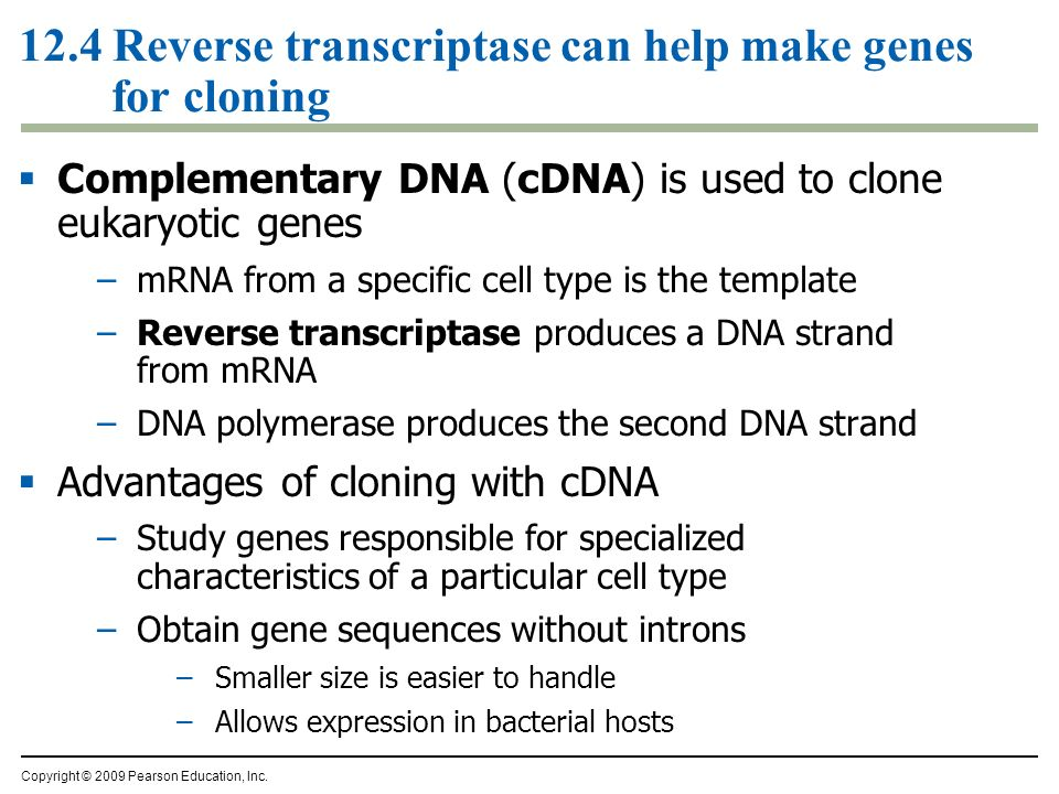 12.4 Reverse transcriptase can help make genes for cloning