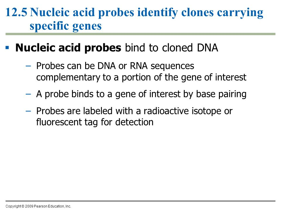 12.5 Nucleic acid probes identify clones carrying specific genes