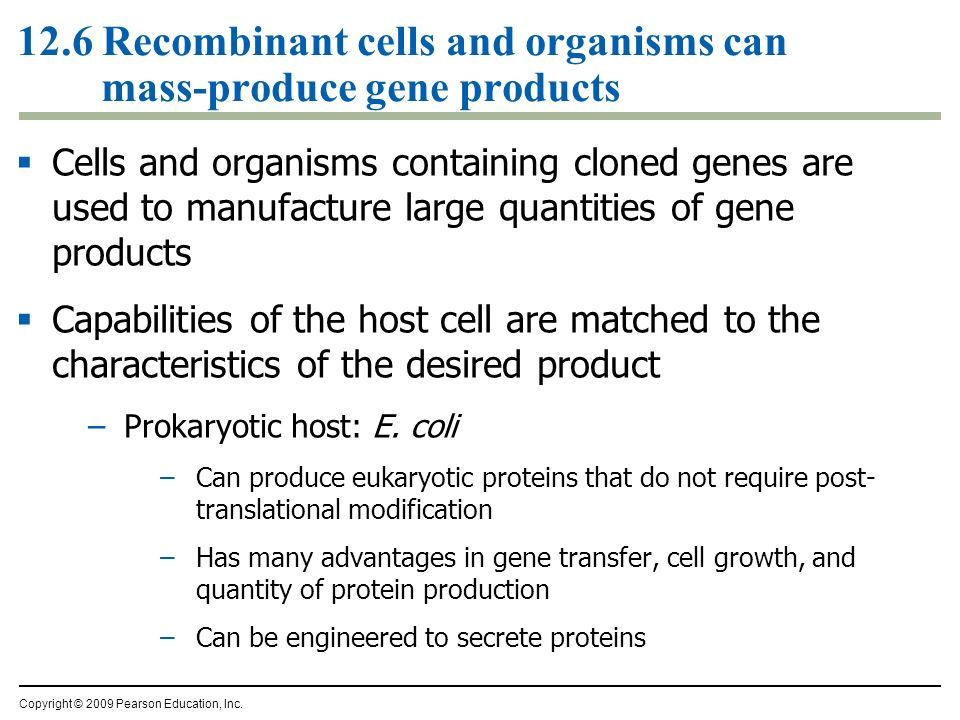 12.6 Recombinant cells and organisms can mass-produce gene products