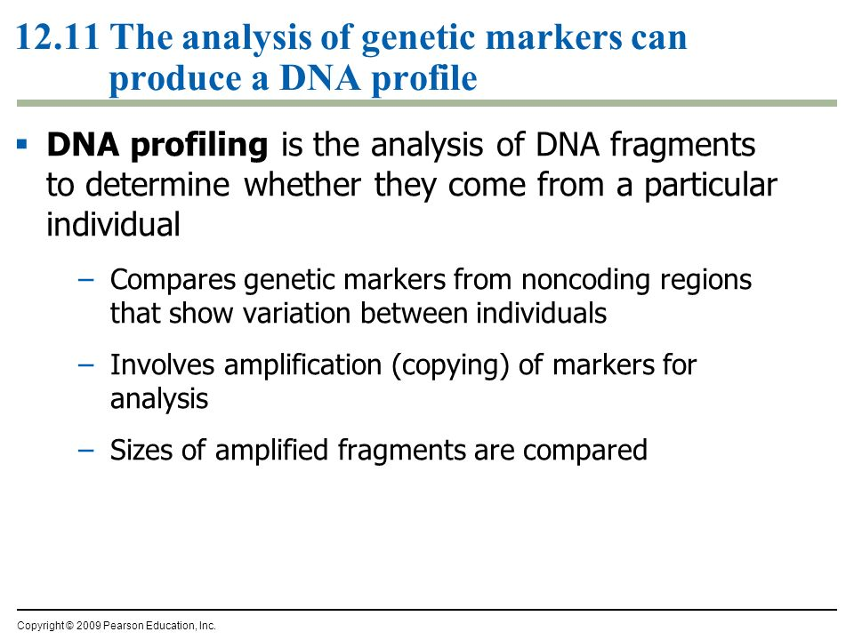 12.11 The analysis of genetic markers can produce a DNA profile