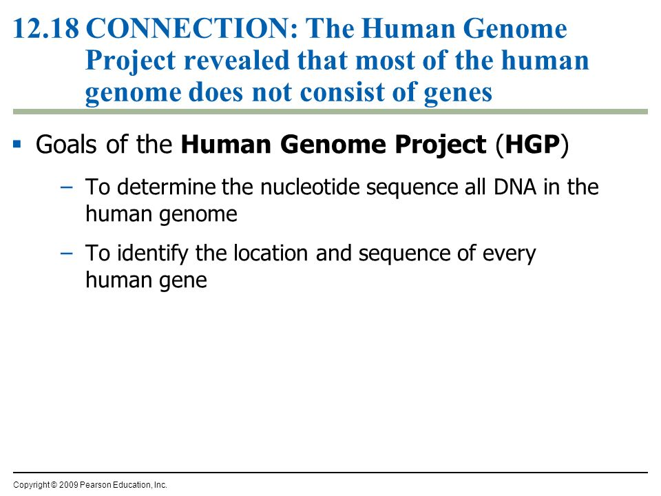 12.18 CONNECTION: The Human Genome Project revealed that most of the human genome does not consist of genes